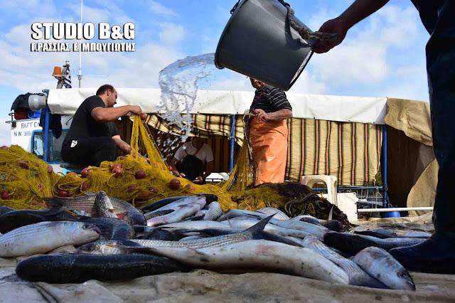 Απίστευτη ψαριά στο Ναύπλιο με δυο τόνους κέφαλους (βίντεο)