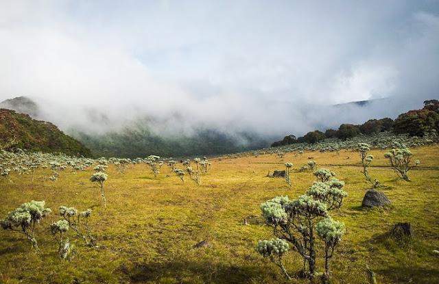 Menikmati Keindahan Bunga Edelweis di Kawasan Gunung Gede Pangrango