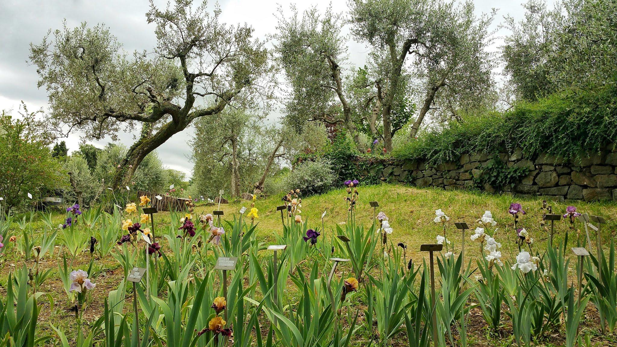 giardino iris firenze