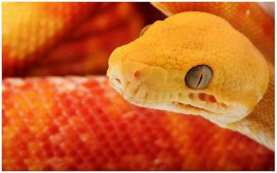 صور ثعابين غريبة