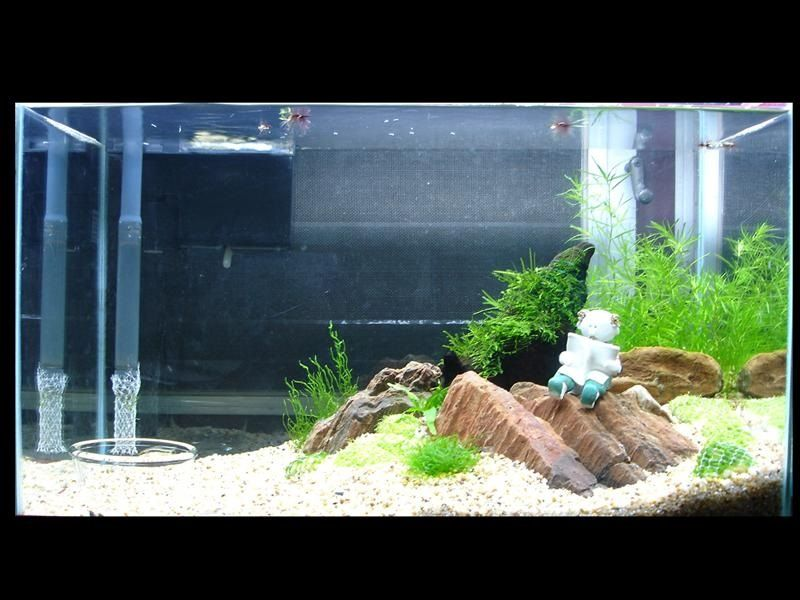 Image What to Expect From Do Betta Fish Need Rocks