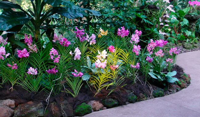Orchids Garden Of The East Indoor And Outdoor Tropical