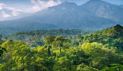 Hutan di Indonesia: Hujan, Musim, Sabana, Bakau, Gambut