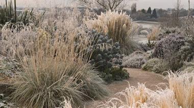 8 gramíneas ornamentales que también aportan interés al jardín en invierno