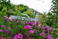 Plantas y flores varias por el Paseo de la Filosofía, en Kyoto
