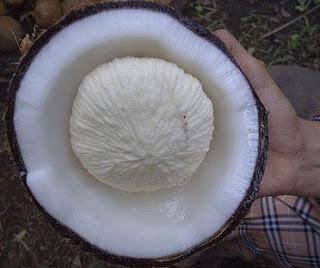 benefits of coconut flower(naryal ke phool ke faide) in urdu