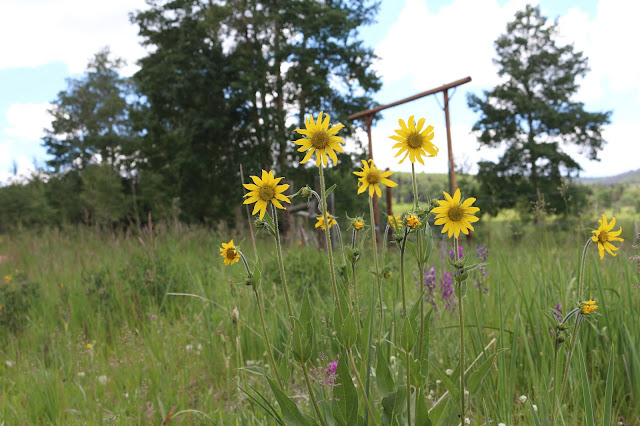 Wildflowers, Living From glory To Glory Blog