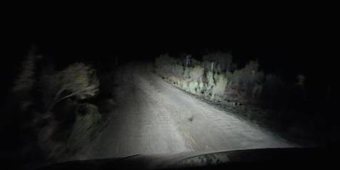 VIDEO: Bikin Ngeri, Mendadak Ada Sesuatu Yang Melompat ke Jalan