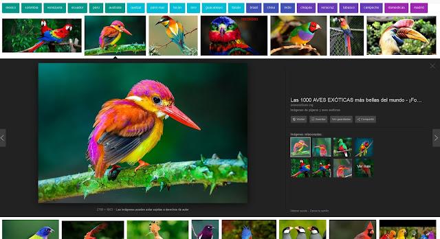 Desaparece el botón VER IMAGEN de los resultados de búsqueda de Google Imágenes