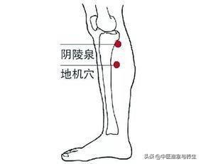 經絡|脾經,人體的大藥房,尤其是這幾個穴位,用好了受益一生!(增強人體氣血)