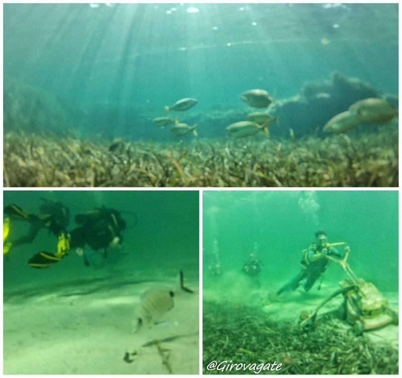 immersioni ibiza diving