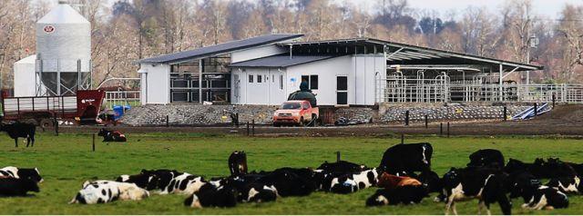 Descartan fiebre Q para veterinaria de Manuka