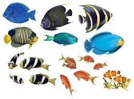 Glossary of Fish Names / English to Tamil / Fish Names in Tamil