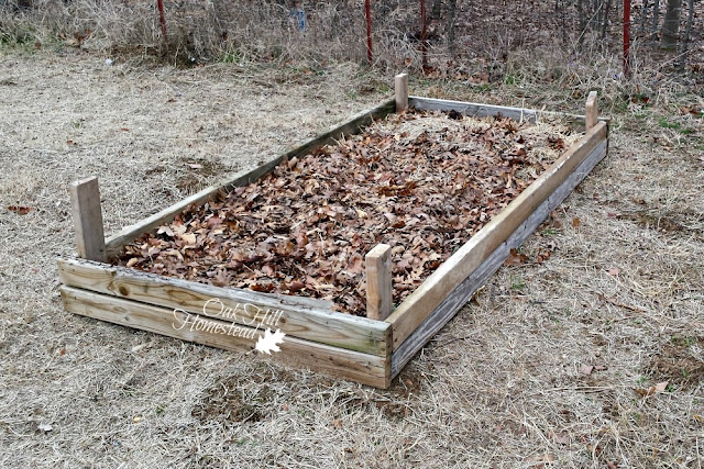 Filling a new raised garden bed with compostables.