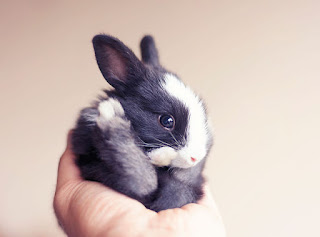 Lovely cute  rabbit images