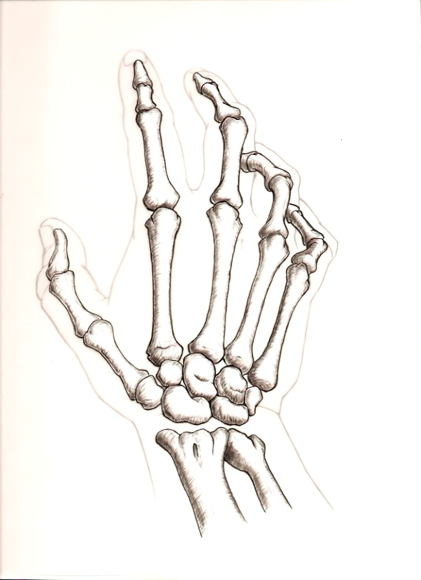Skeleton Hand Images