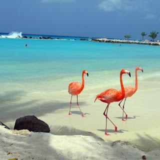 AMERICA: Aruba 12