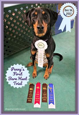 doberman barn hunt dog rescue canine sports ribbons high in class