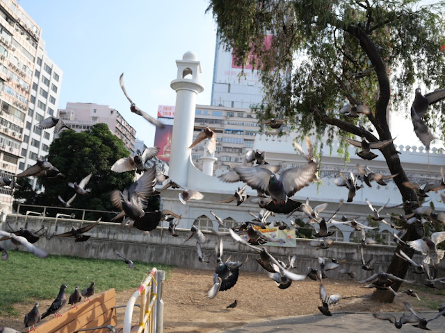 Pigeons taking flight at Kowloon Park