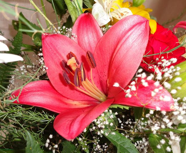 цветы, фото цветов, лилии, день рождения