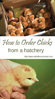 How to order chicks from a hatchery  |  from Oak Hill Homestead
