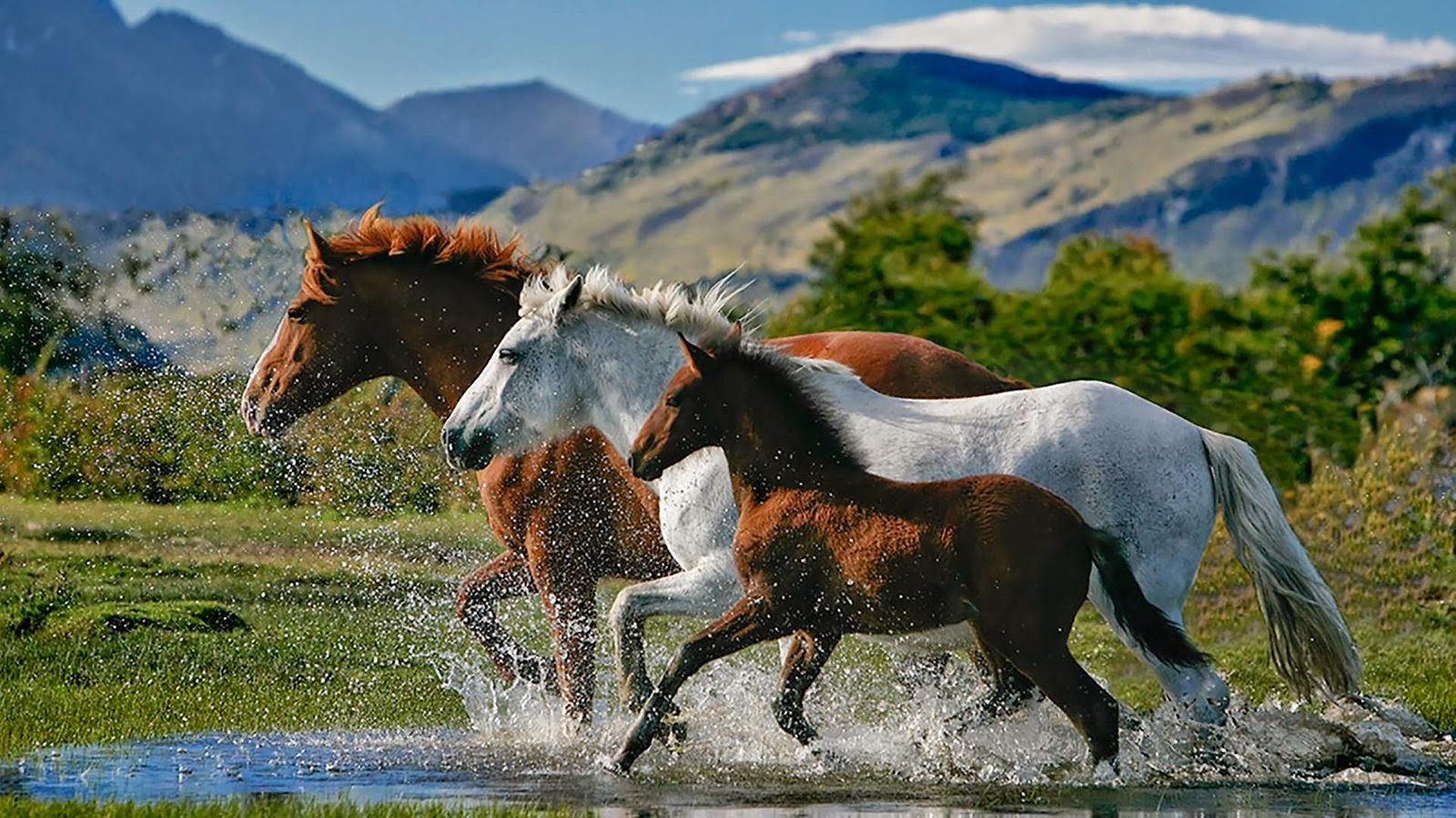 Papel De Parede De Cavalo Para Quarto -> Fts De Cavalo Rm Adesivo Pra Quarto