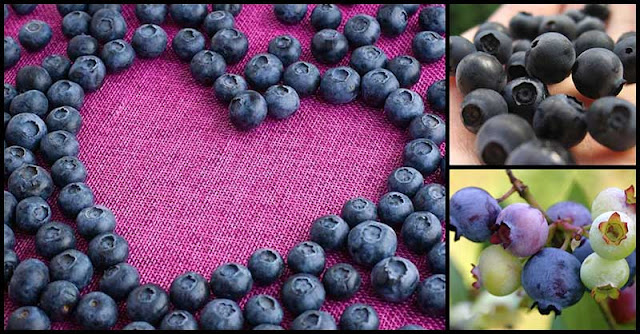 A Cup Of Blueberries A Day Can Keep Heart Diseases At Bay