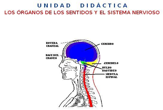 http://www.ceiploreto.es/sugerencias/averroes/sanwalabonso/uudd/ud_sentidos/index.htm