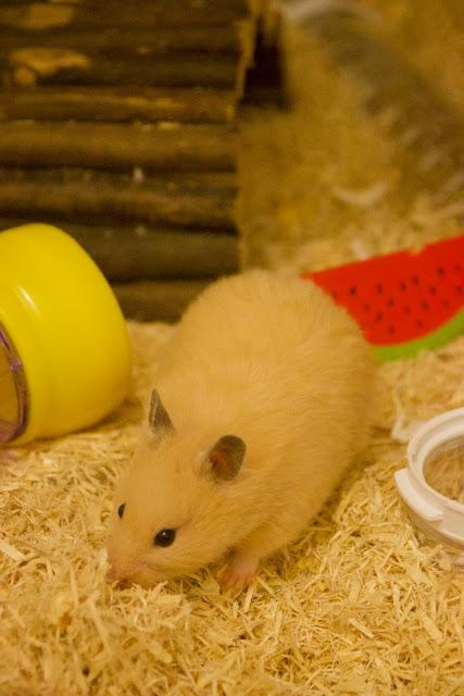 Mature Hamster Tube