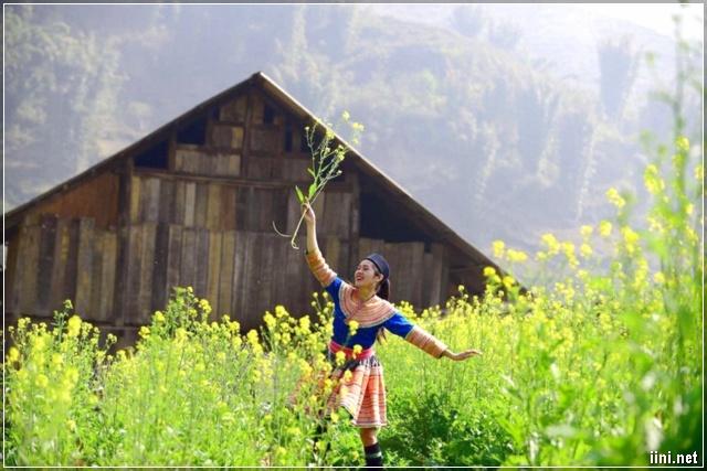 ảnh cô gái người dân tộc trong vườn hoa cải