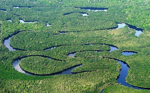 Amazônia | Floresta Amazônica e Sua Biodiversidade Ecocultural