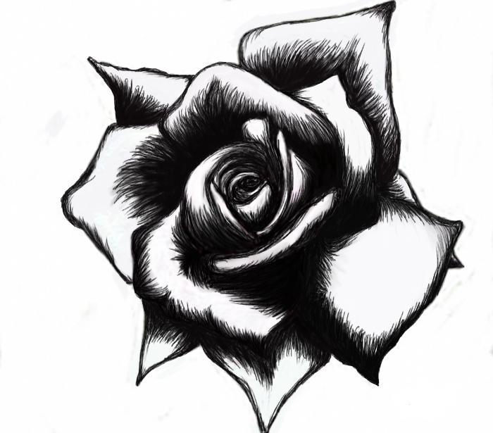 Для открыток, картинки розы черно белые тату
