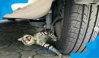Arti Mimpi Menabrak Kucing Menurut Primbon Jawa