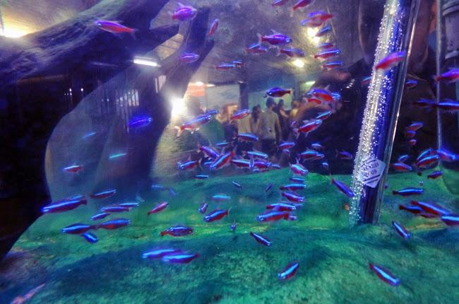 aquario-aparecida-sp