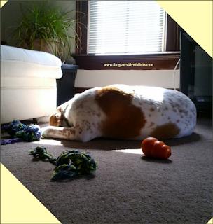 Dog Valentino Sleeping in a Sunbeam