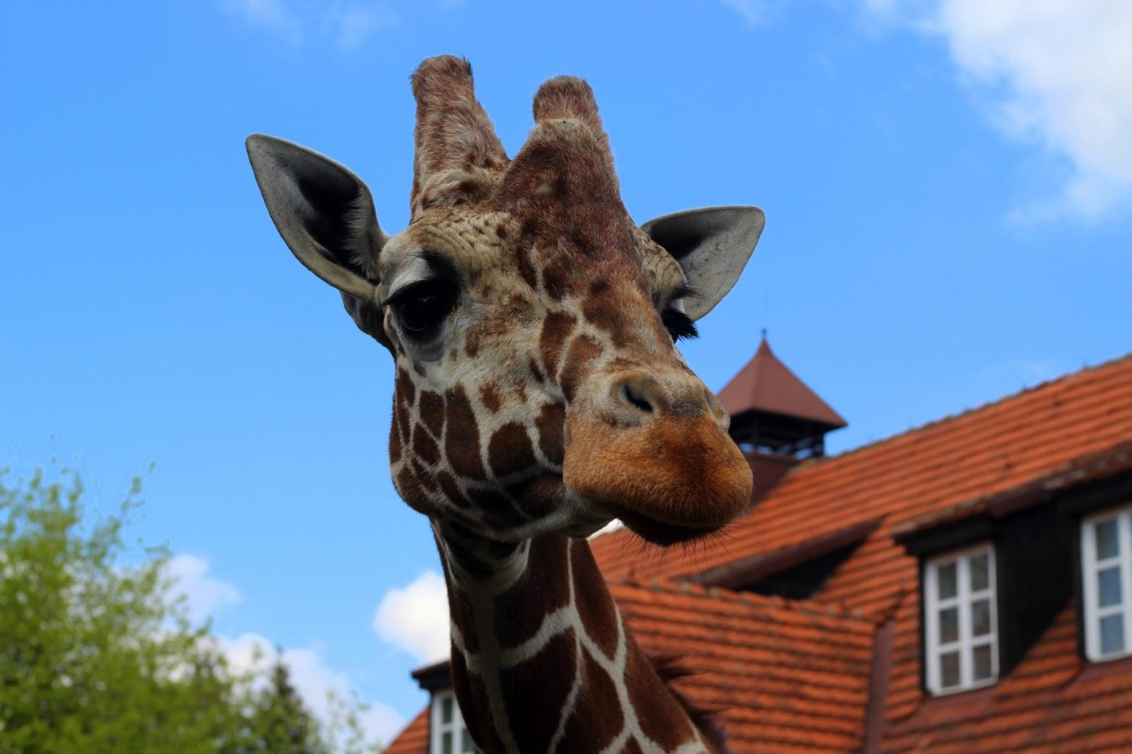 Wrocławskie Zoo :)