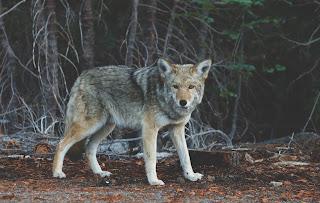 photo of wolf by Josh Felise on Unsplash