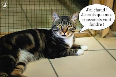 Magnifique chat aux yeux jaunes.