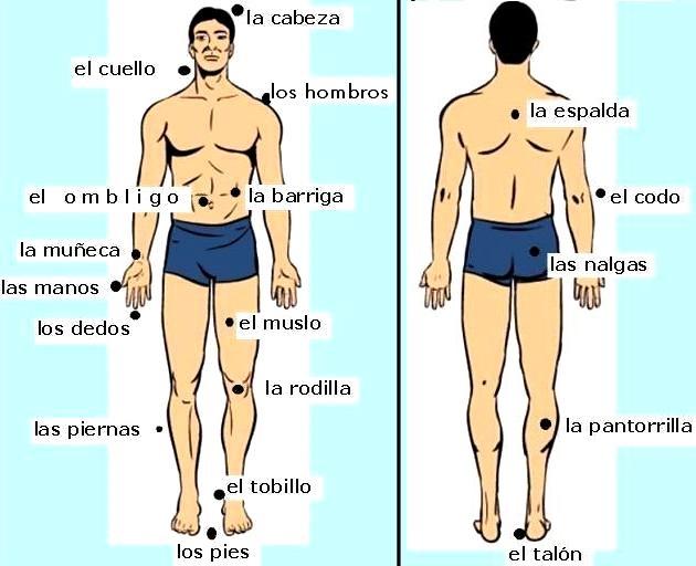 Imagen del cuerpo humano de un hombre señalando sus partes externas