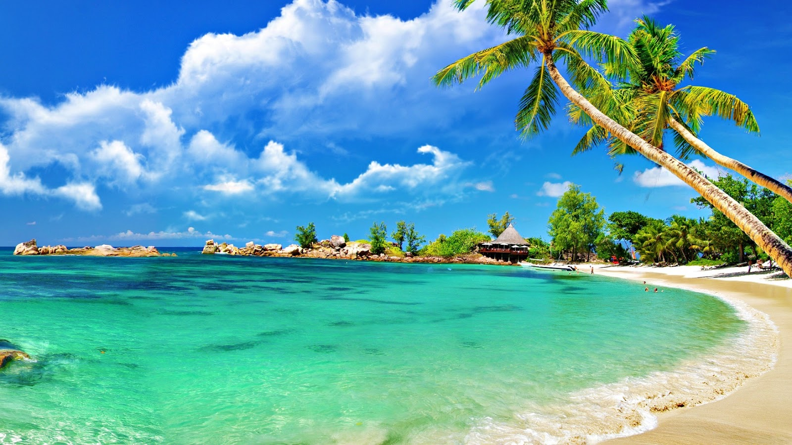 Hd Tropical Island Beach Paradise Wallpapers And Backgrounds: Tropical-Palm-beach-1920x1080
