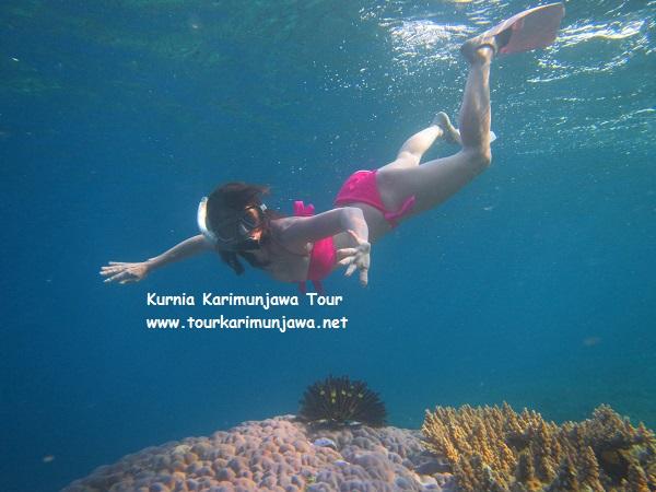 lokasi untuk snorkeling di karimunjawa