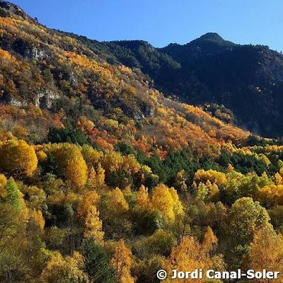 Árboles de otoño en Valarties