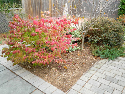 Oakwood Village Toronto Backyard Fall Cleanup after by Paul Jung Gardening Services