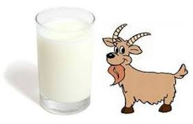 goat milk(bakri ka doodh) health benefits in urdu