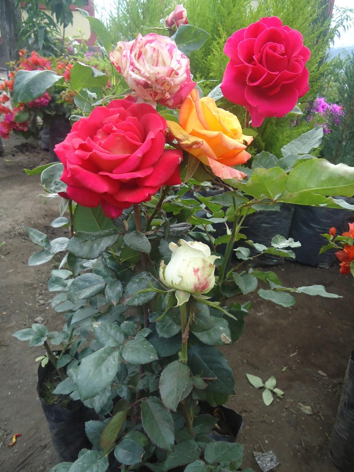 Compras y venta de plantas ornamentales for 6 plantas ornamentales
