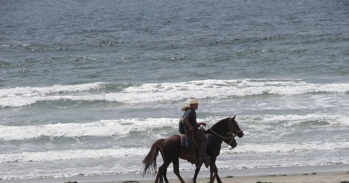 Riding Lessons Riding Lessons In South Carolina