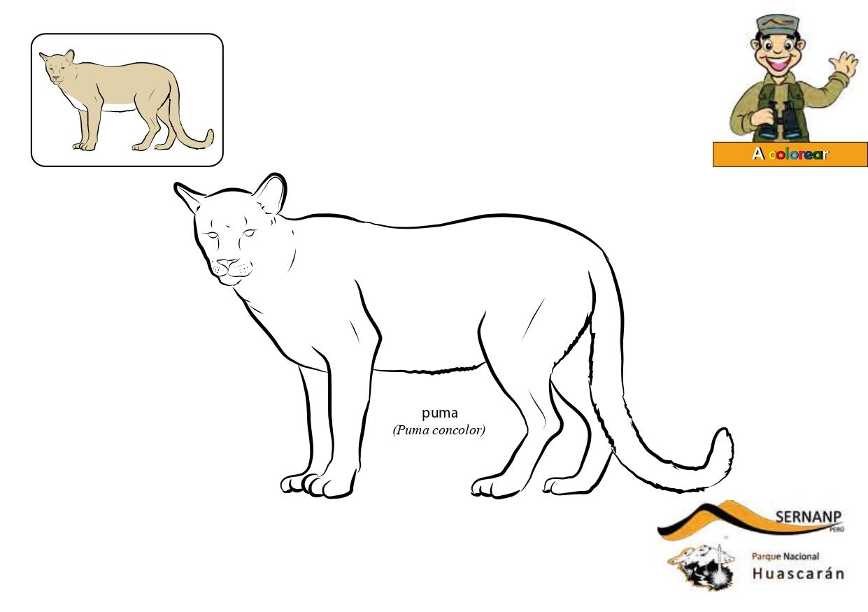 Illinois capa Género  Colorear animales de perú - Jugar y Colorear