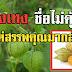โทงเทงสมุนไพรไทยข้างถนน ชื่อไม่คุ้นหูแต่สรรพคุณมากล้นทั้งลดเบาหวาน ขับพยาธิ