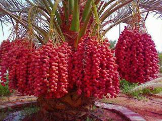Zakat Pertanian Menurut Madzhab Empat (3)
