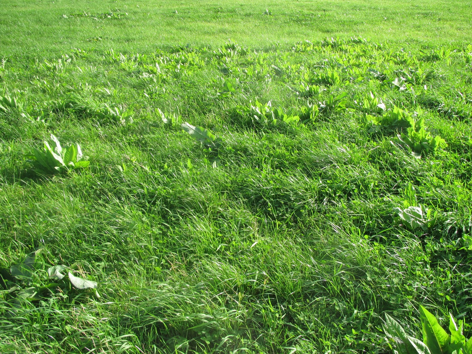 Pasture to Profit: Herbal Clover Pastures Challenge Our ...